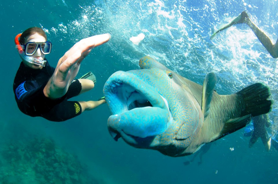 student snorkeling with fish in Great Barrier Reef