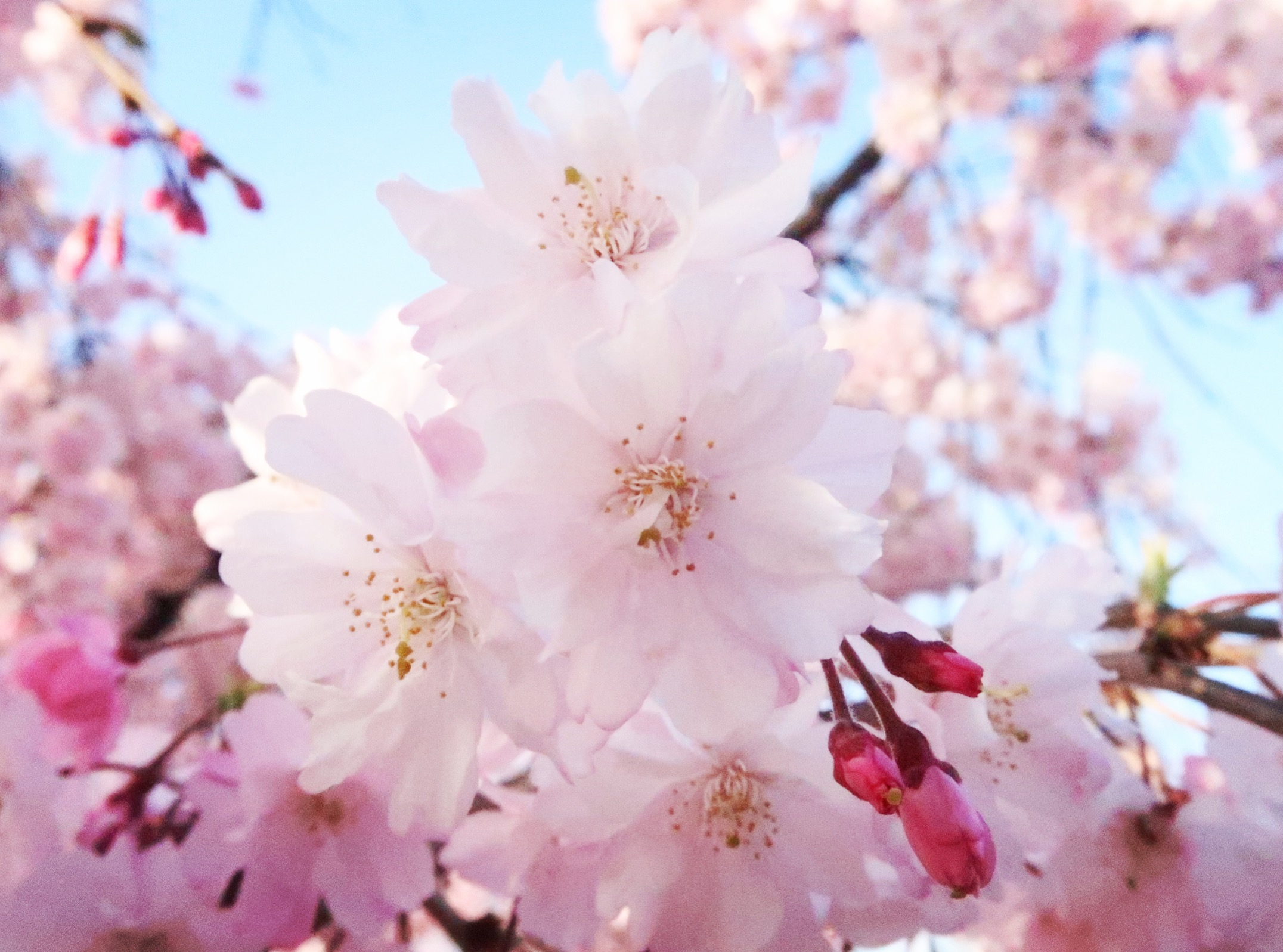 Nagoya In The Spring A Guide To Sakura Study Abroad Blogs Ies