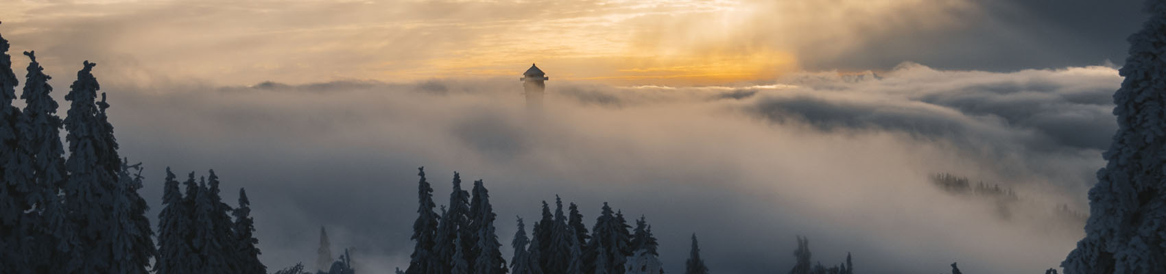 foggy morning in Feldberg, Germany