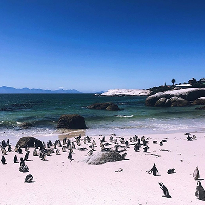 Penguins on the beach off the coast of South Africa