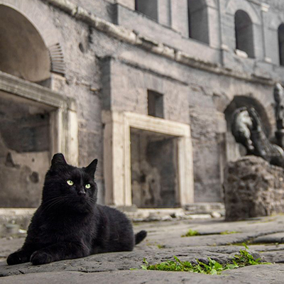 A black cat lounges around the ruins in Rome.