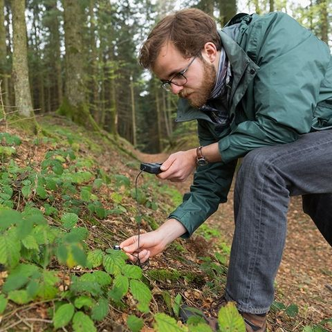 a student kneels in the woods to inspect some plants