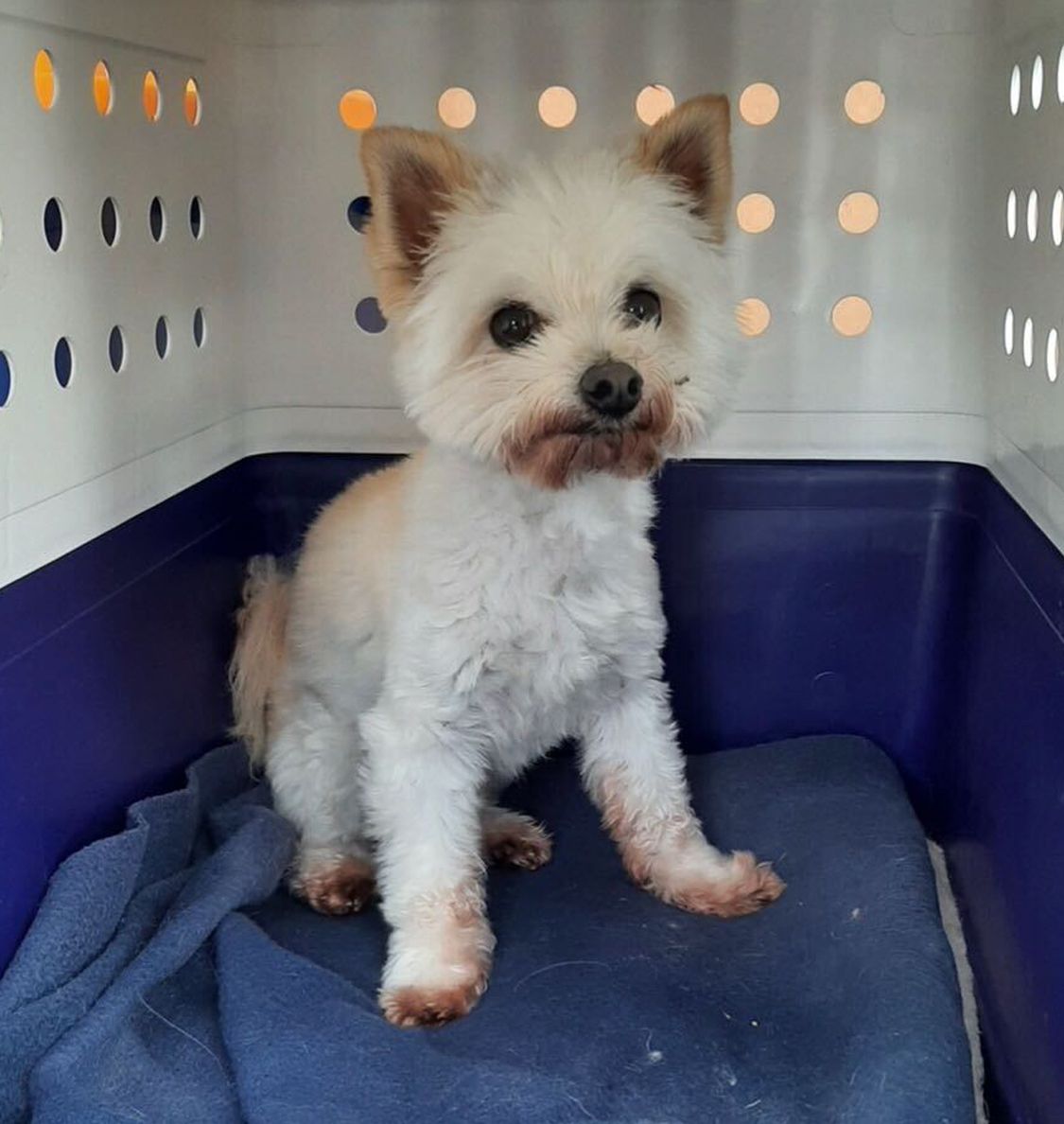Dog in moving crate