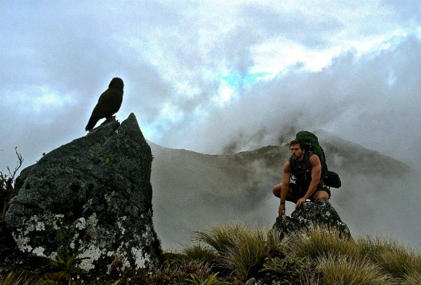 Eagle in New Zealand