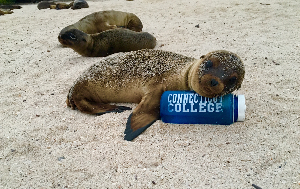 Sea lion pup resting head on water bottle