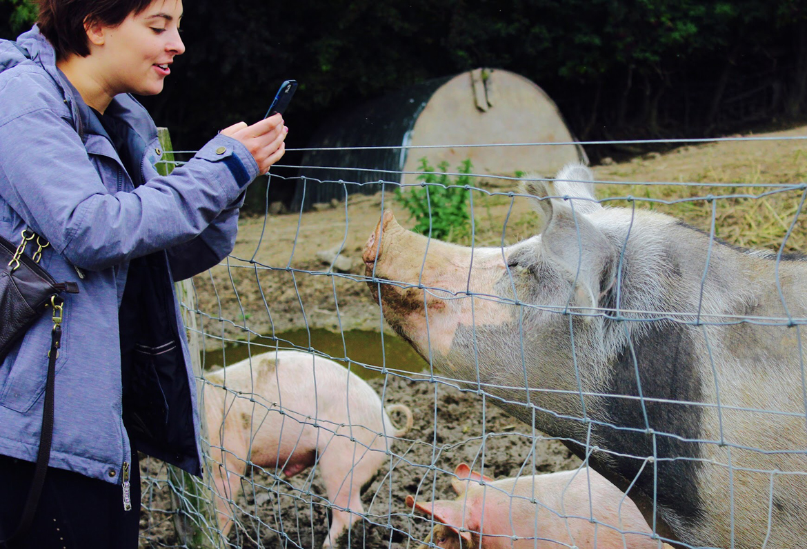 student taking photo on her phone of pigs