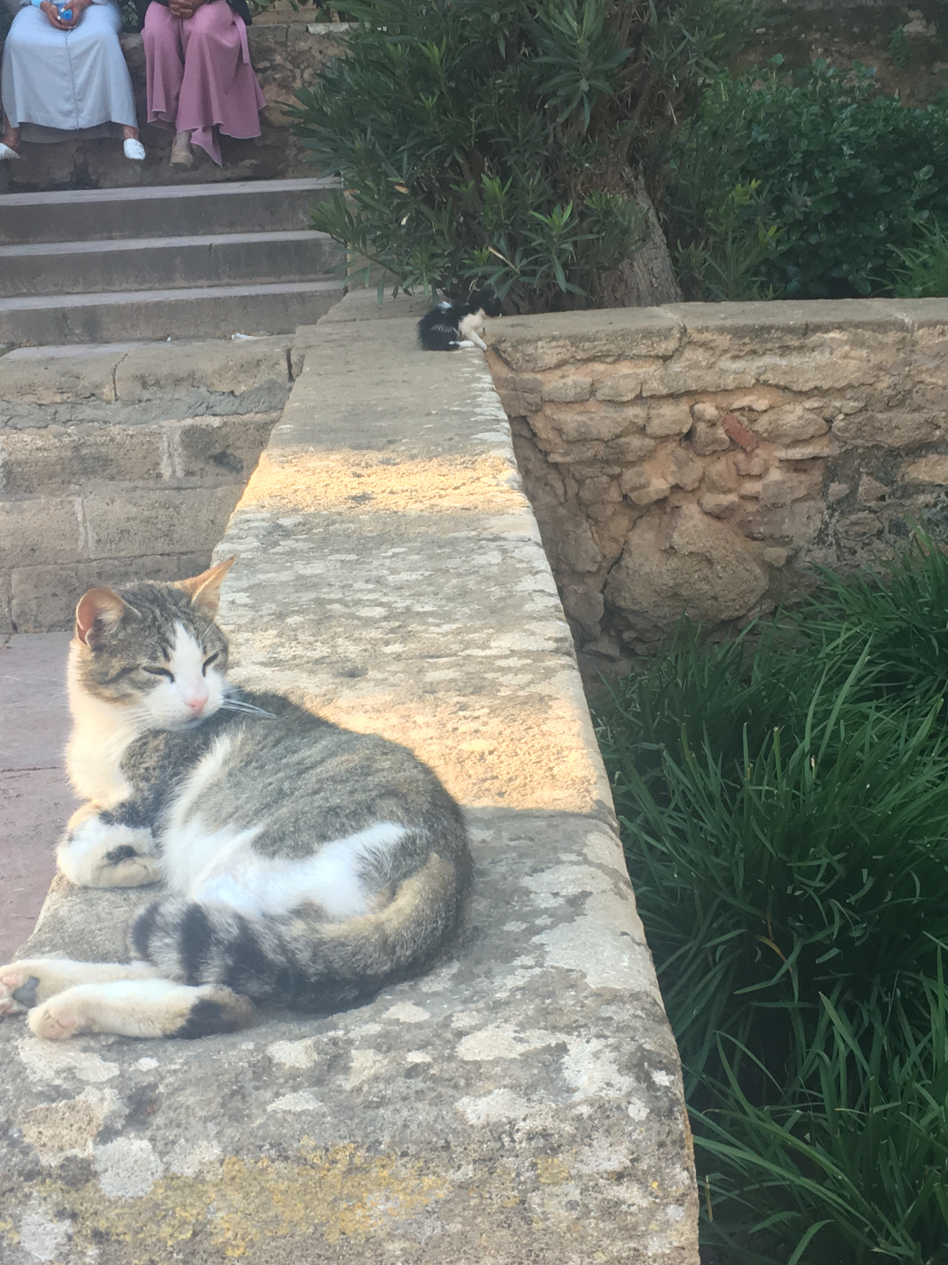 Cat on a wall in the Andalusian gardens