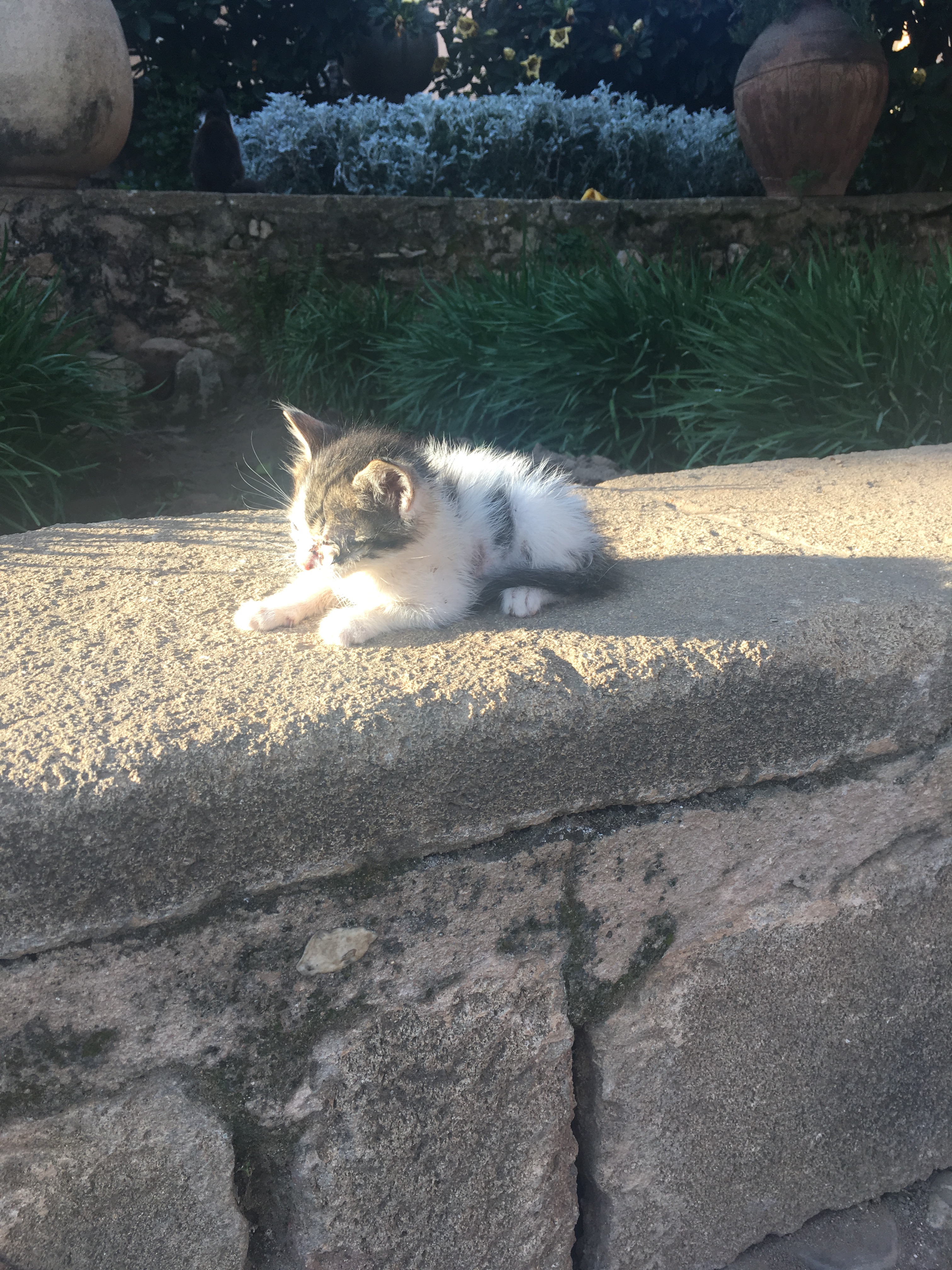 A kitten on the wall in the sun