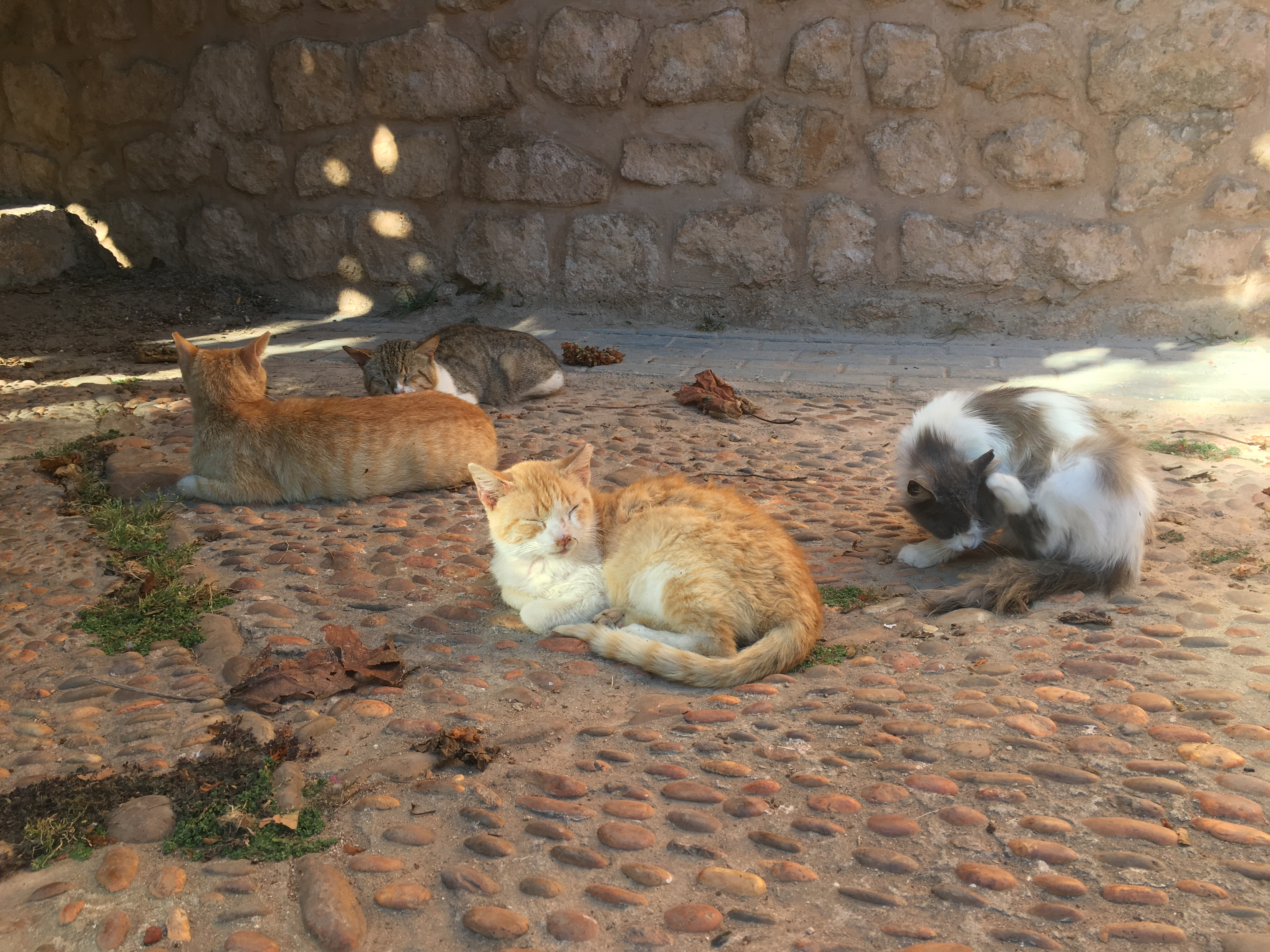 Cats lounge in the shade
