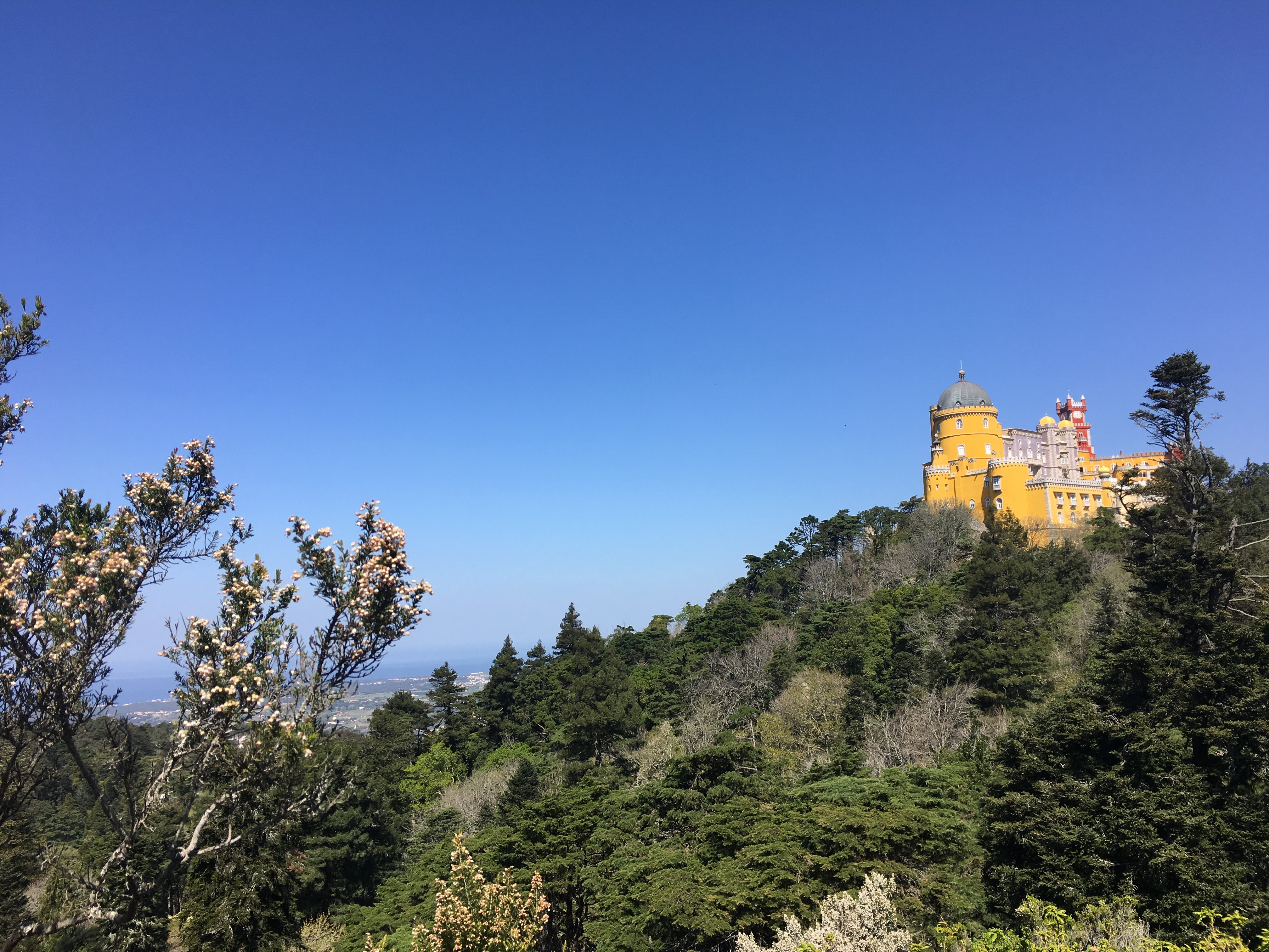 A view of the Pena palace on a wooded hillside