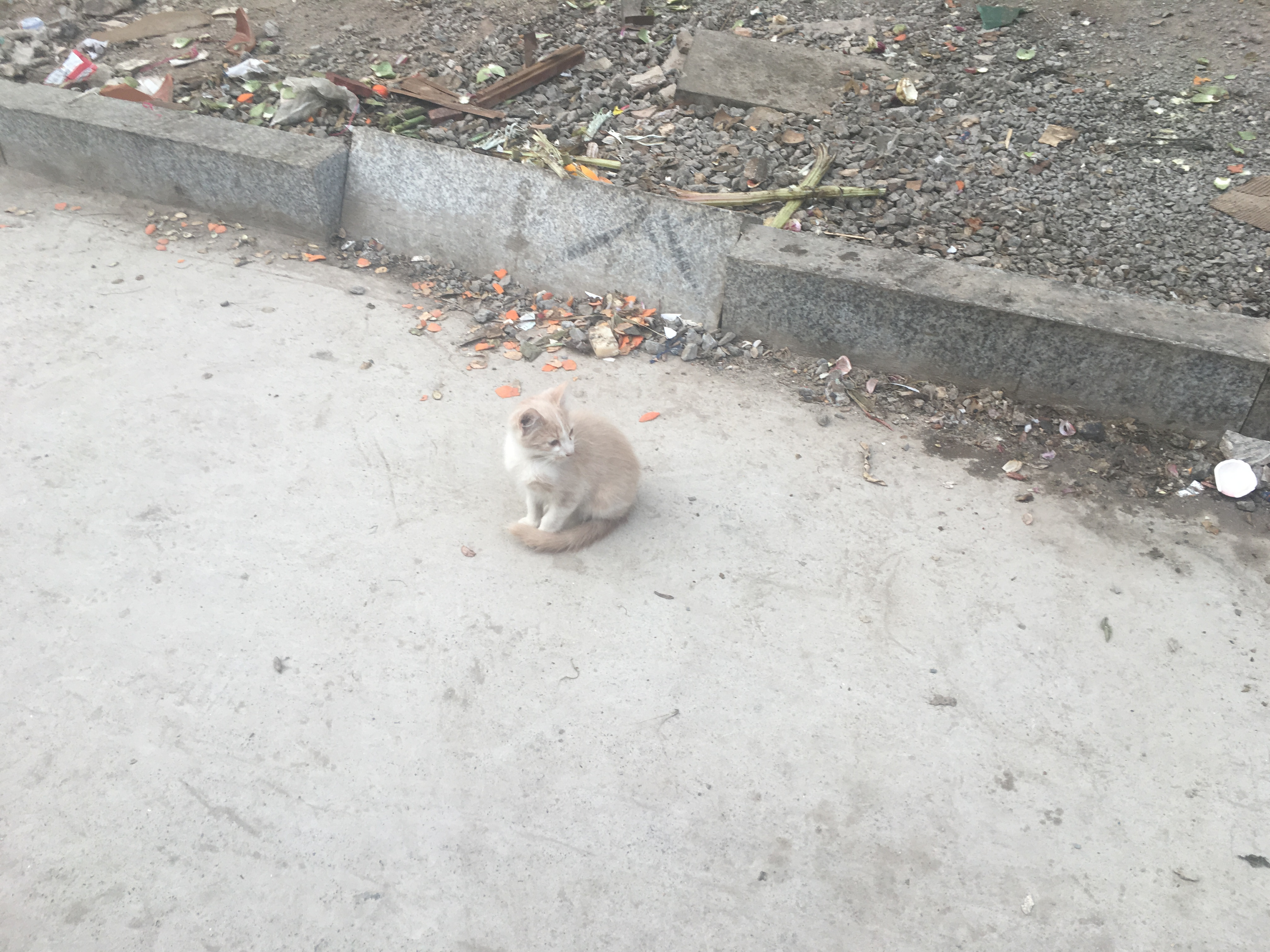 kitten sits on the side of a dusty road