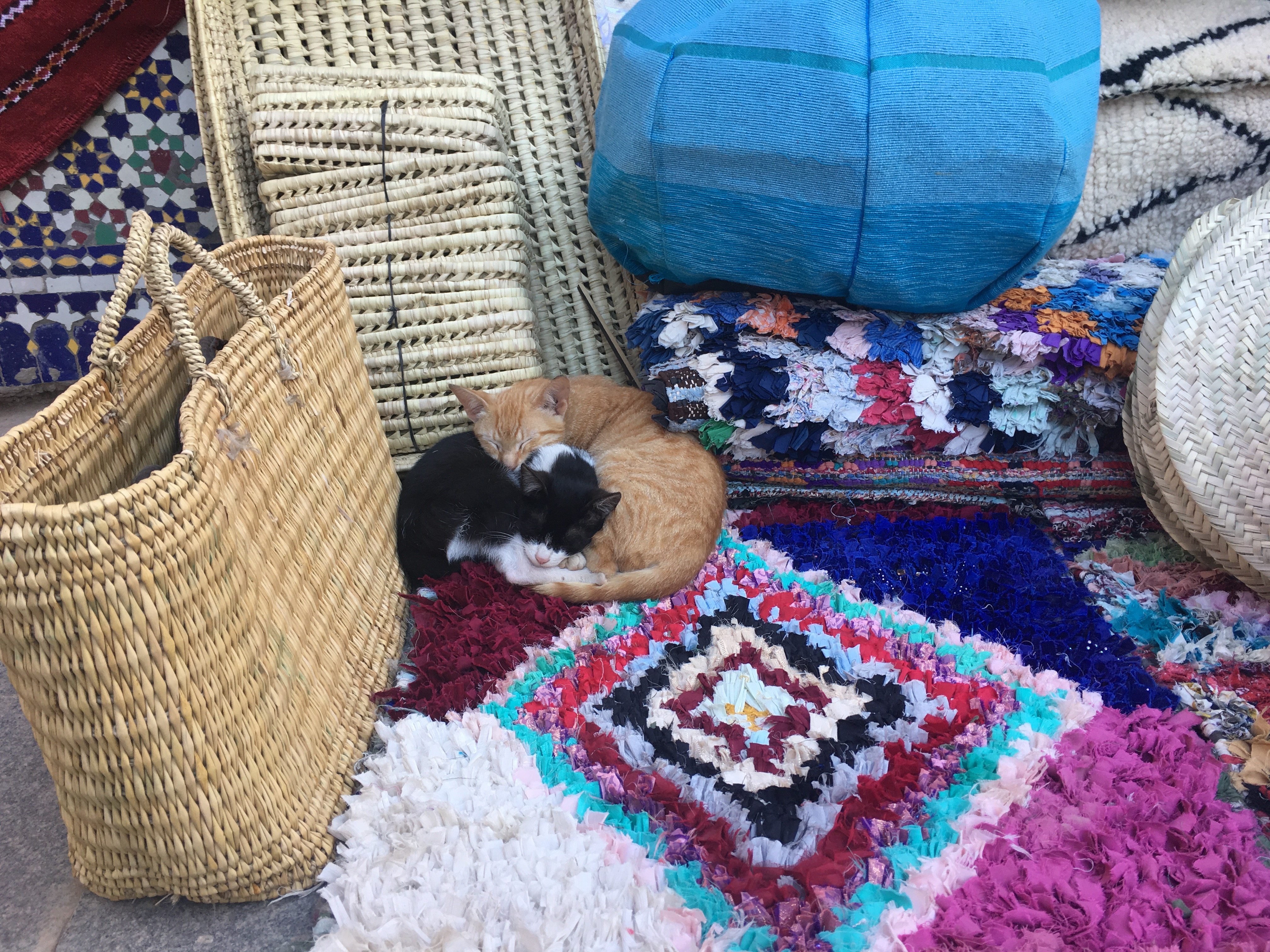 two small cats curled up at the rug seller's