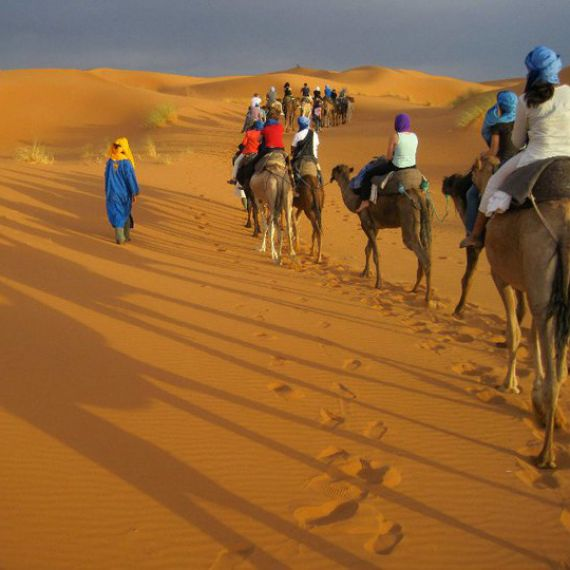 Students in the Sahara Desert on camels