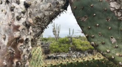 View through a cactus of Los Tuneles