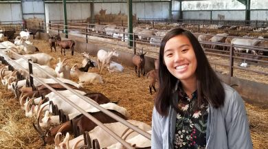 Smiling girl standing in front of a row of goats eating grasses