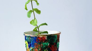 mint plant, painted pot