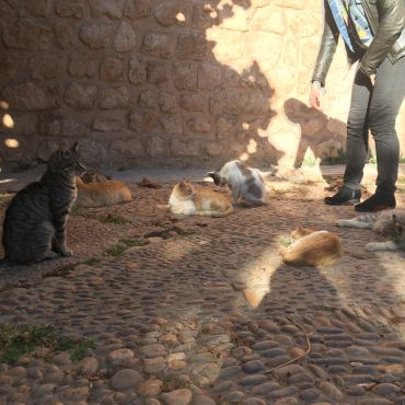 A group of cats sitting in the Andalusian gardens