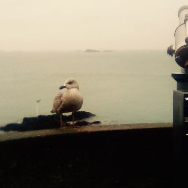 Seagull, telescope, and an ocean view