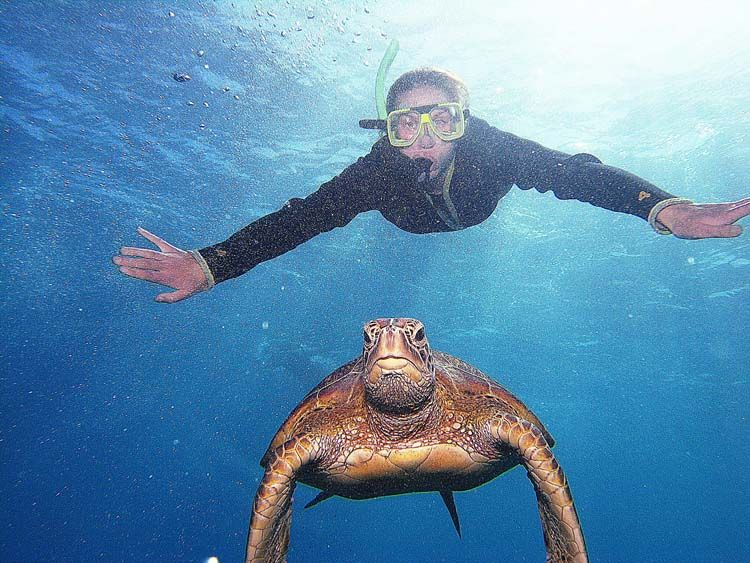 IES student scuba diving with a tortoise