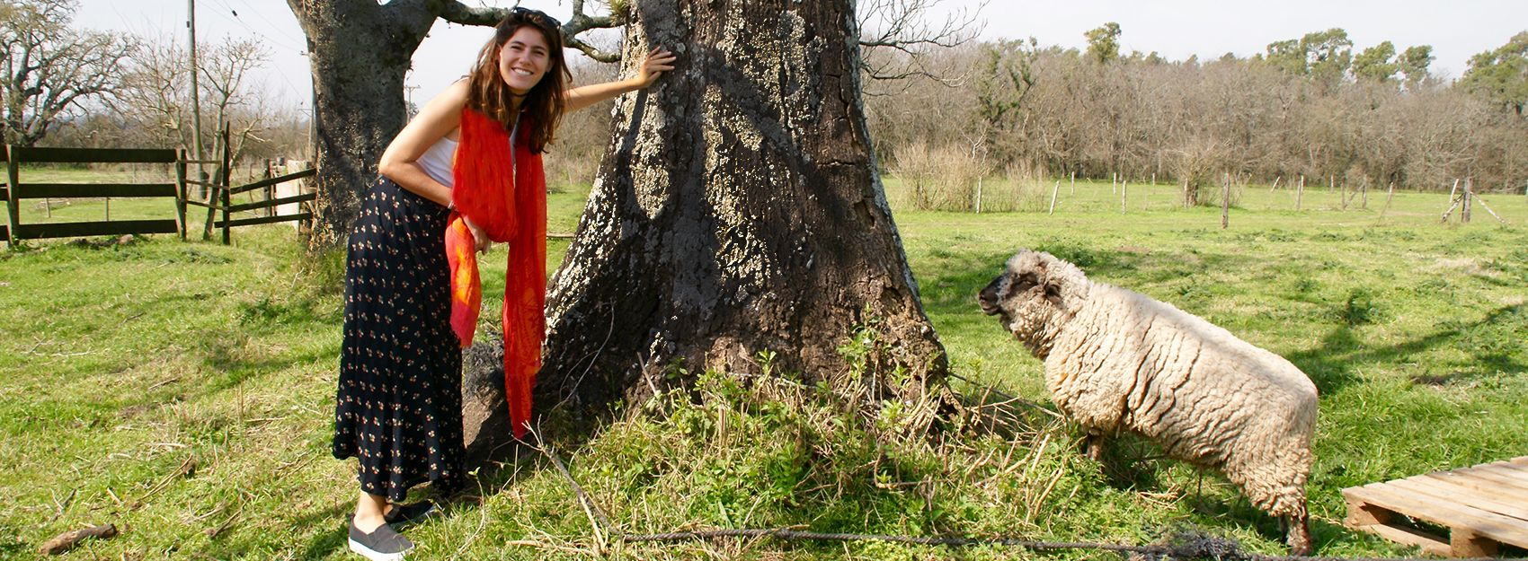 Buenos Aires study abroad student poses by a tree and a sheep