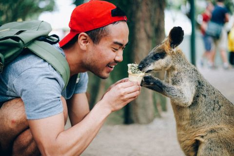 Feeding a wallaby at Featherdale National Park in Australia!