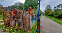 Colorful Leaves on a Fence in Vauban