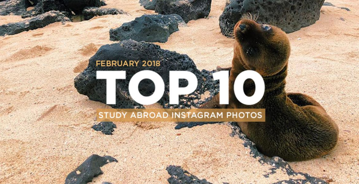 Top 10 Instagram Photos for February 2018 Featured Image - Seal in Sand