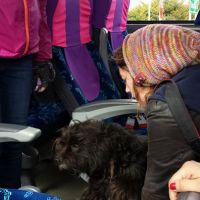 Me taking a Dog off our bus in Chiloé-Not my photo!