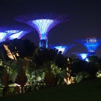 Singapore Tree Forest
