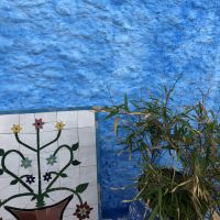A mosaic and a plant propped up on a blue wall.