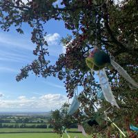 A view of the 'Fairy Tree' overlooking the valley